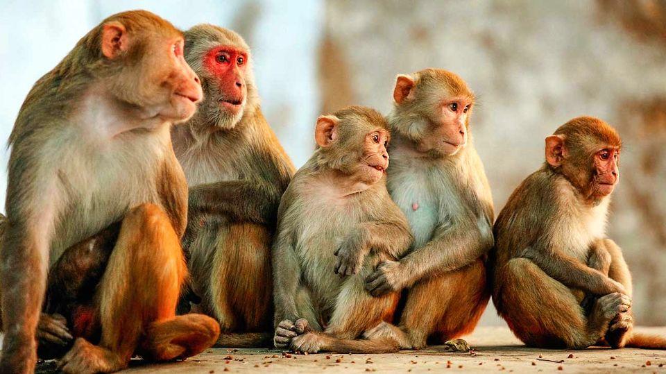 مرگ اولین چینی بر اثر ابتلا به «ویروس میمونی»