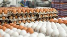 افزایش قیمت تخم مرغ در بازار (چهارشنبه 19 مهر)