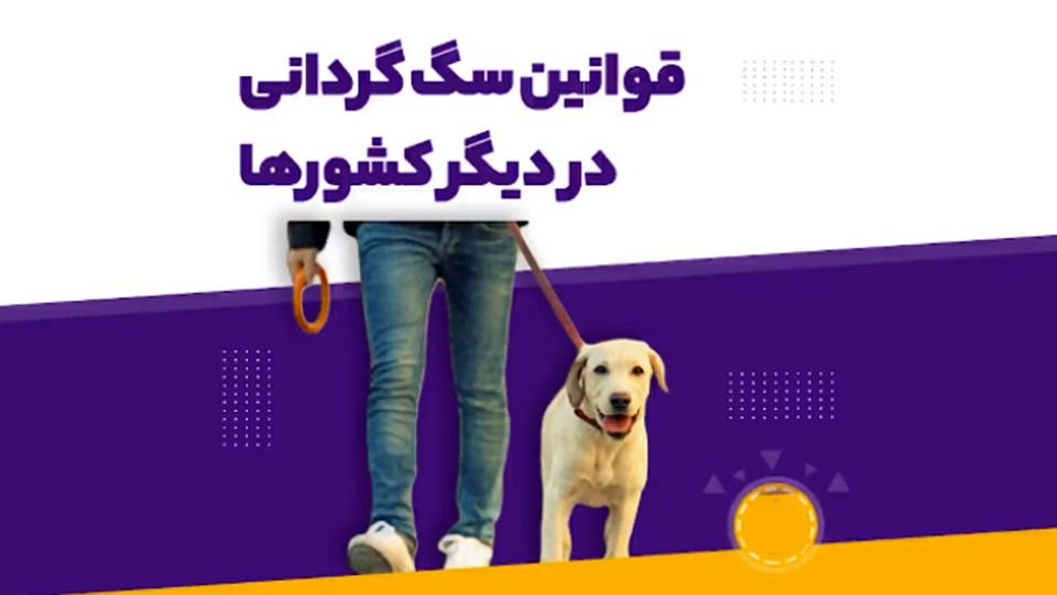نگاهی به قوانین سگگردانی در کشورهای مختلف جهان + ویدئو